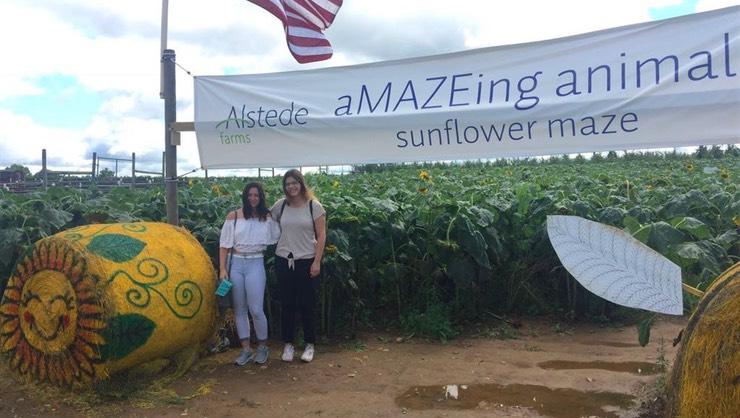 Buddies doing a sunflower maze.