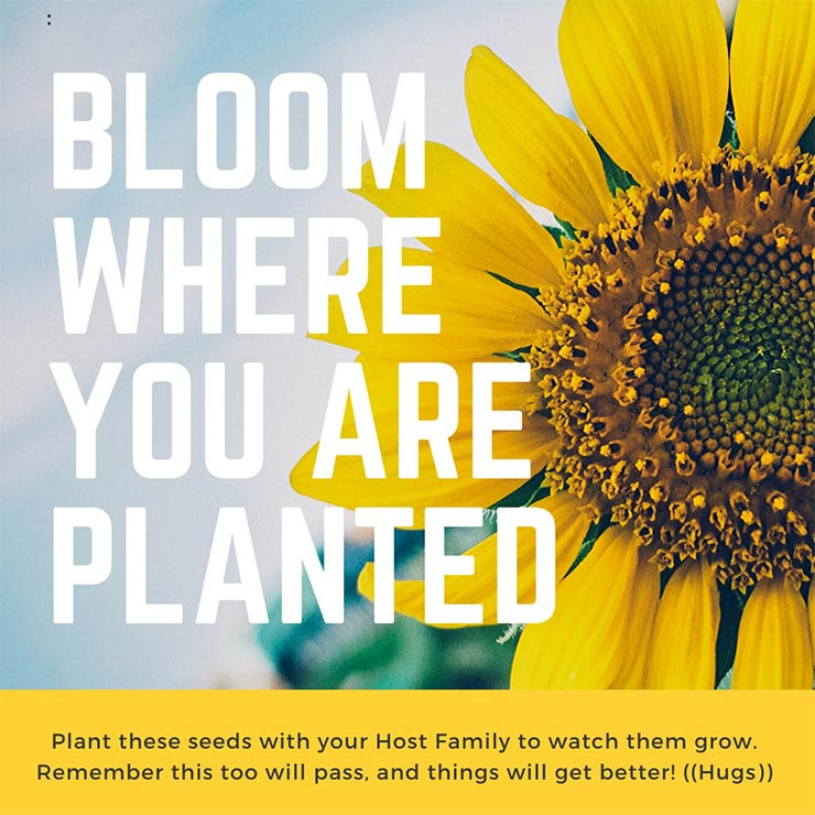 """A Canva design of a sunflower over the text """"Bloom Where You Are Planted"""""""