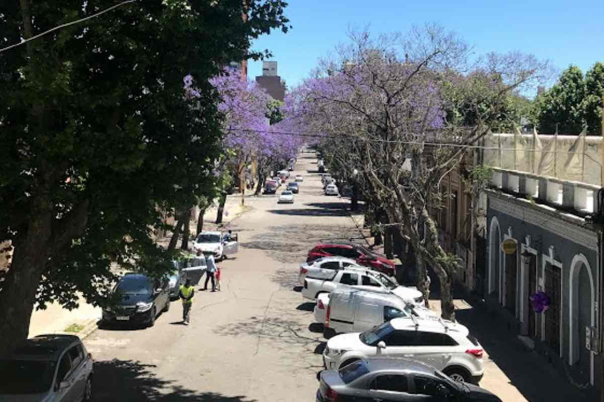 Beautiful, tree-lined street in Montevideo.