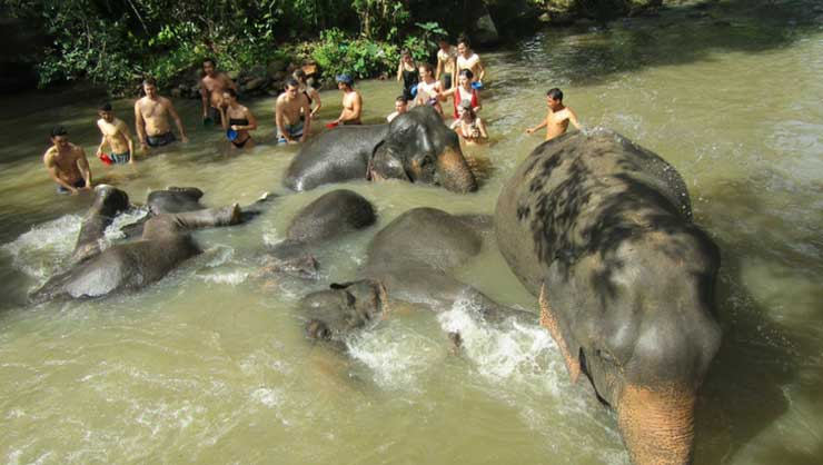 Elephants cooling off at the Elephant Jungle Santuary in Chiang Mai
