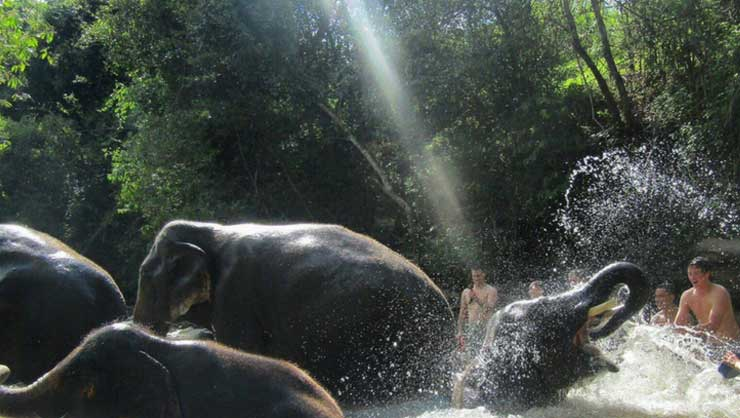 Why You Should Visit This Elephant Sanctuary in Thailand