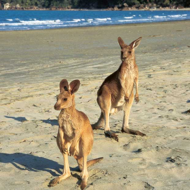 Australia has over 120 species of marsupials!