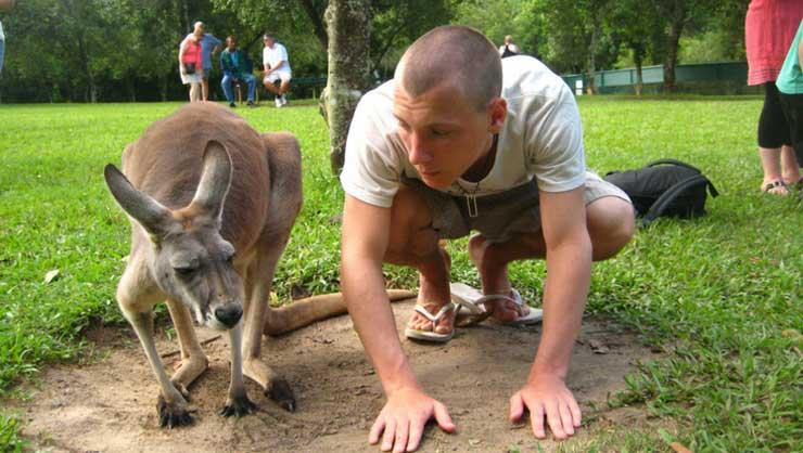 Koalas, kangaroos and echnidas abound!