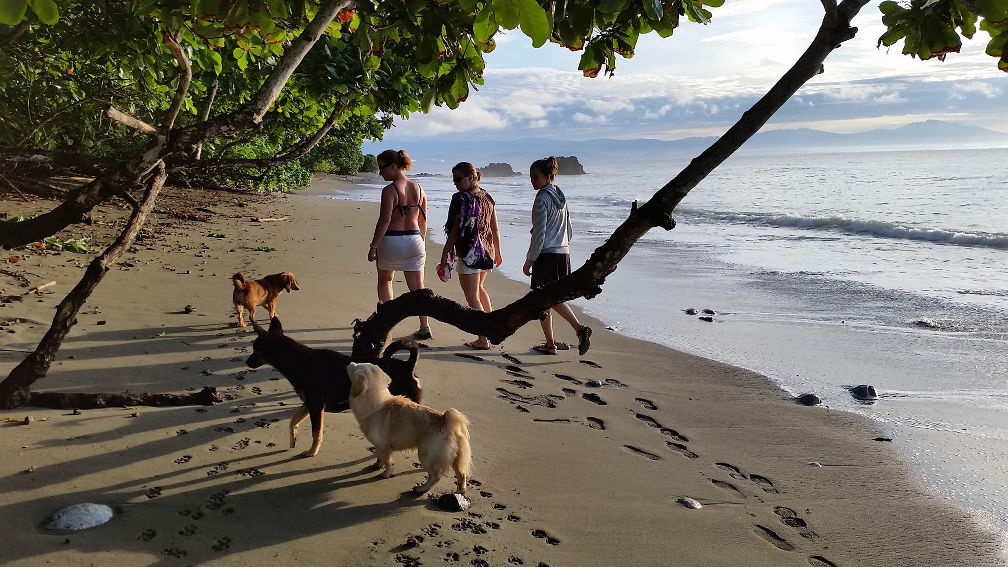 Costa Rica Tree Climbing