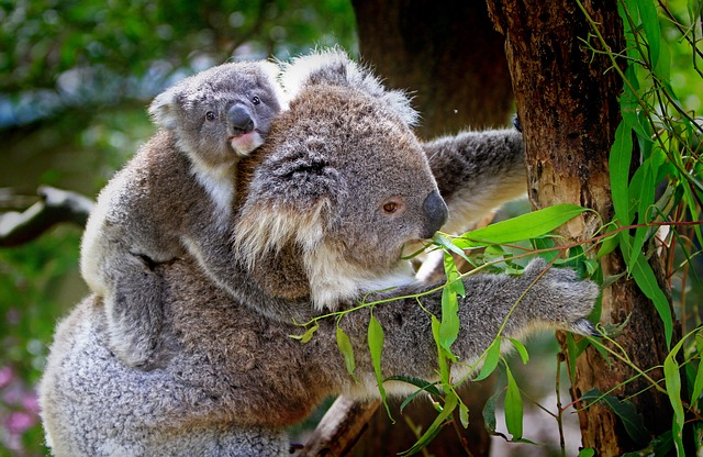 See koalas and other unique wildlife up close at Wildlife World.