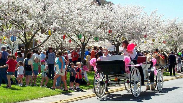 Macon Georgia Cherry Blossom Festival