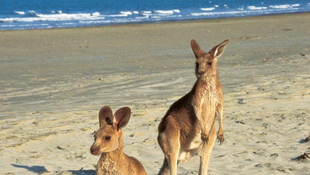 Work & Travel Australia Outback Farm Adventure