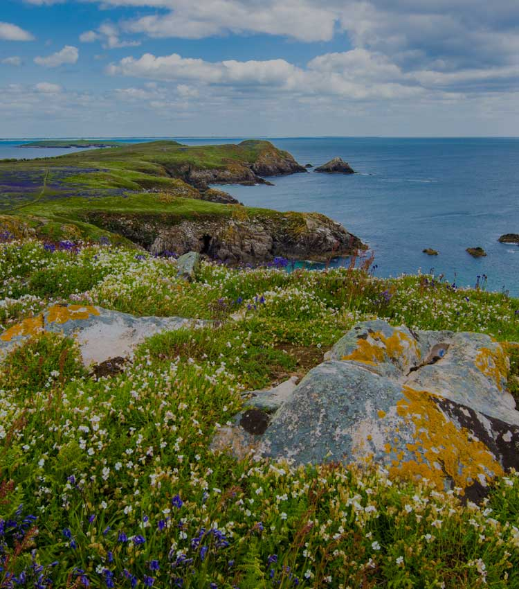 Ireland's Flowers and Sea
